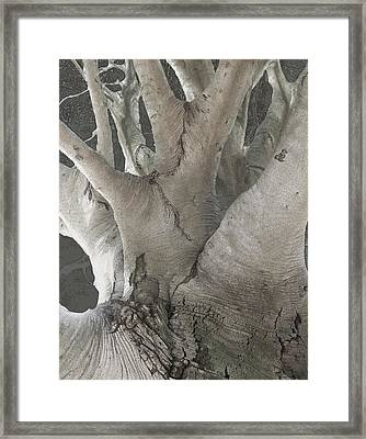 Copper Beech Framed Print
