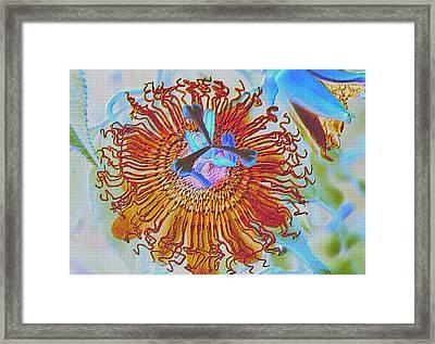 Copper Passionflower Framed Print by Rosalie Scanlon