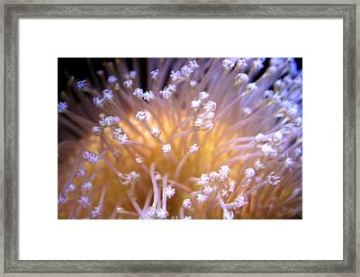Coral 3 Framed Print