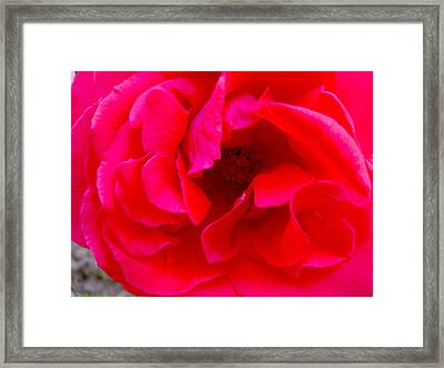 Coral Beauty Framed Print