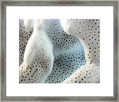 Coral Framed Print by Chad and Stacey Hall
