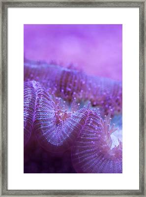 Coral Close-up I Framed Print by Adam Pender