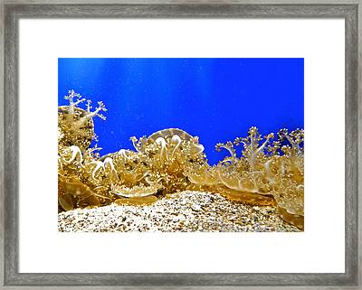 Coral Like Golden Crowns Framed Print by Kirsten Giving