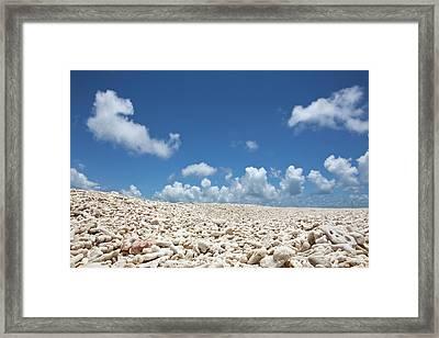 Coral On A Beach Framed Print by Caspar Benson