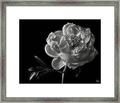 Coral Peony In Black And White Framed Print by Endre Balogh