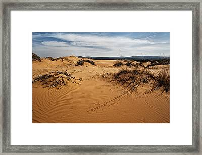 Coral Pink Framed Print by Stephen Campbell