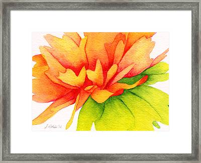 Coreopsis Framed Print by Sue Lohse