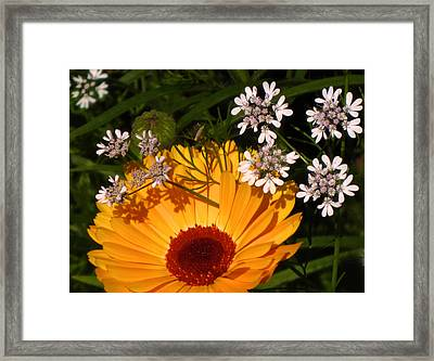 Coriander Calling Framed Print by Richard Cummings