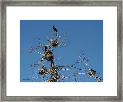 Cormorant Condos Framed Print by Stephen  Johnson