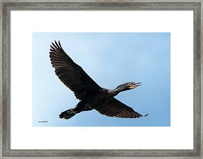 Cormorant Flying Over Duck Lake Framed Print by Stephen  Johnson