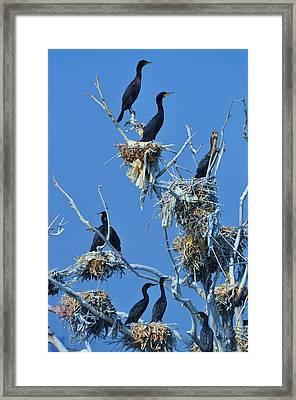 Cormorant Habitat Framed Print