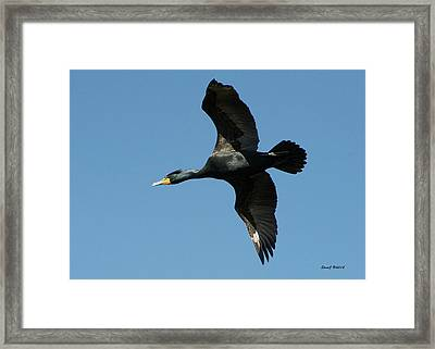 Framed Print featuring the photograph Cormorant In Flight by Stephen  Johnson