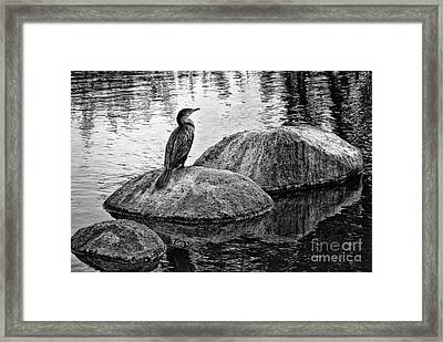 Framed Print featuring the photograph Cormorant On Rocks by Jim Moore