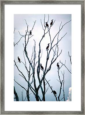 Cormorant Raiders Framed Print