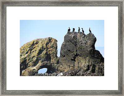 Cormorants At Indian Point Framed Print