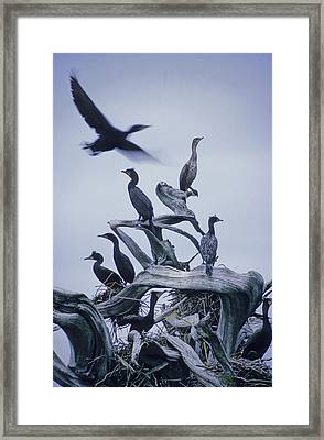 Cormorants Fly Above Driftwood, Grey Framed Print by Leanna Rathkelly