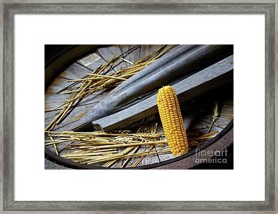 Corn Cob Framed Print by Carlos Caetano