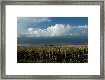 Corn Country Framed Print