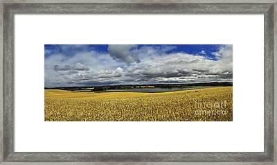 Corn Field Panorama Framed Print by Heiko Koehrer-Wagner