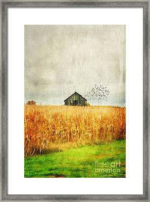 Corn Fields Of Kentucky Framed Print by Darren Fisher