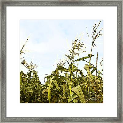 Corn In Summer Framed Print by Artist and Photographer Laura Wrede
