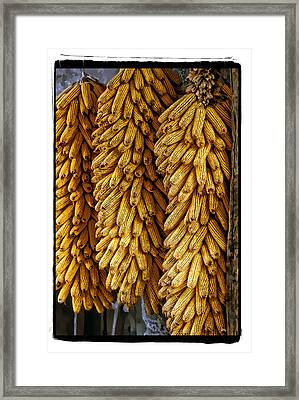Corn  Framed Print by Mauro Celotti