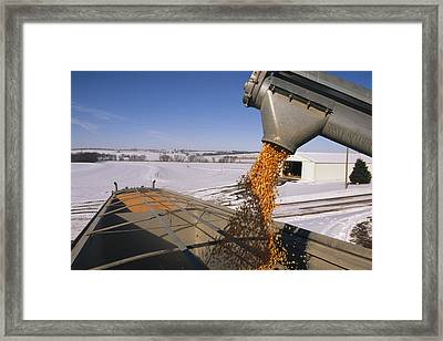 Corn Pours From An Auger Into A Grain Framed Print by Joel Sartore