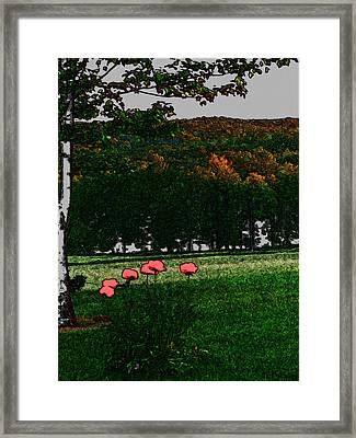 Corner Of My Eye Framed Print by Debra     Vatalaro