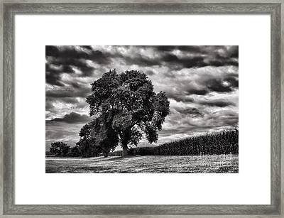 Cornfield Framed Print by HD Connelly