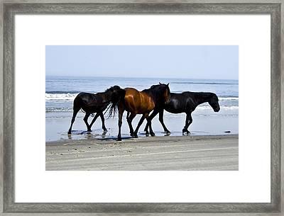 Corolla Beach Horses Framed Print