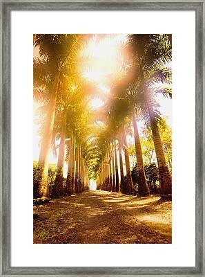 Corridor Of Palm Trees Framed Print