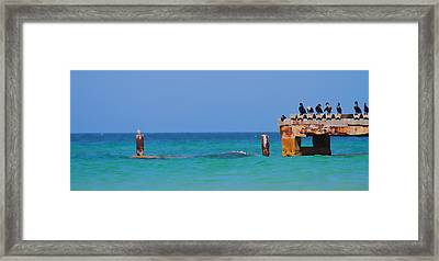 Cortez Beach Framed Print by Betsy Knapp