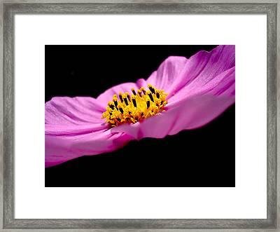 Cosmia Flower Framed Print by Sumit Mehndiratta