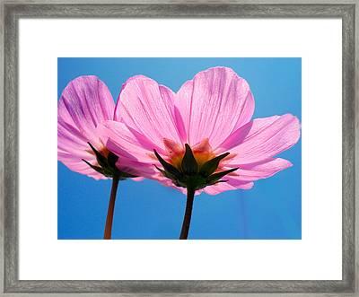 Cosmia Flowers Pair Framed Print by Sumit Mehndiratta