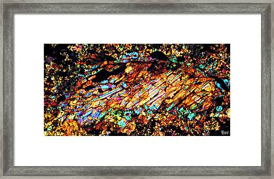 Cosmic Trout  Framed Print