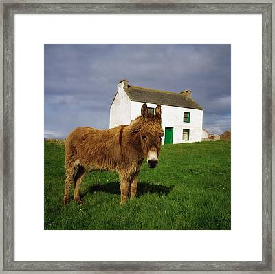 Cottage And Donkey, Tory Island Framed Print