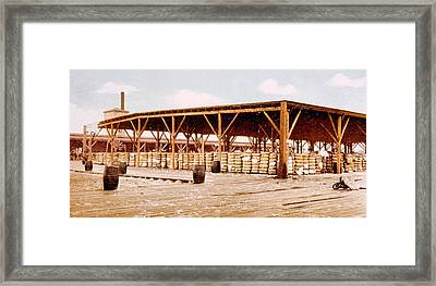 Cotton Bales For Export On The Docks Framed Print by Everett