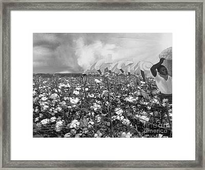 Cotton Field Framed Print by Belinda Threeths