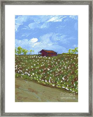Cotton Field Two Framed Print