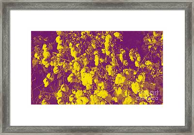 Cotton Golden Southwest Framed Print by Feile Case
