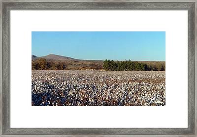 Cotton Landscape Protected 02 Framed Print