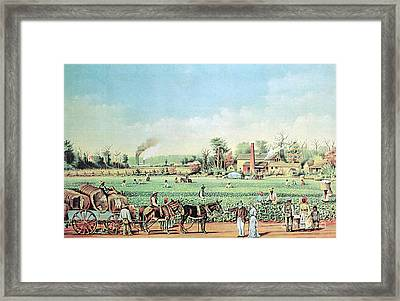 Cotton Plantation On The Mississippi Framed Print by Photo Researchers