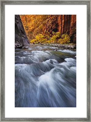 Cottonwood Row Framed Print by Joseph Rossbach