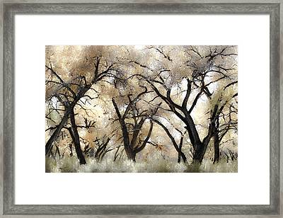 Cottonwood Trees Framed Print by Denice Breaux
