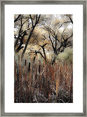Cottonwoods And Cat Tails Framed Print by Denice Breaux