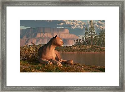 Cougar At Evening Framed Print by Daniel Eskridge