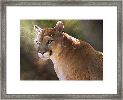 Framed Print featuring the digital art Cougar by Mary Almond