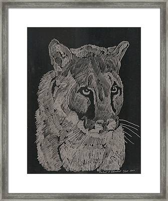 Cougar Framed Print by Robert Clement