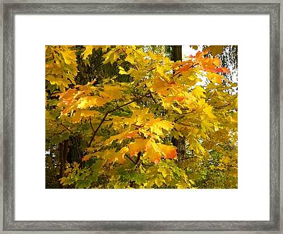 Country Color 10 Framed Print by Will Borden