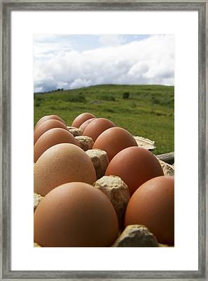 Country Fresh Framed Print by Betsy Knapp